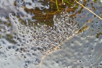 First frogspawn of 2017