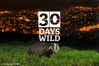 30dayswild badger
