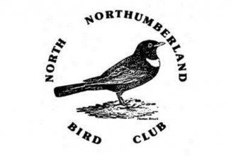 north northumberland bird club