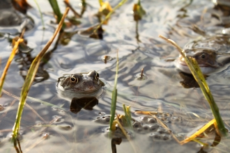 Frogs at Saint Nicholas Park by Becky Johnson