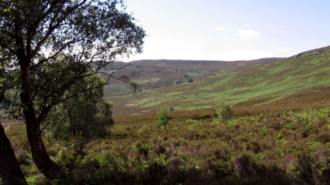 Harbottle Crags | Northumberland Wildlife Trust