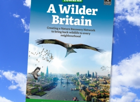 Towards a wildlife britain cover