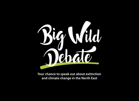 Big Wild Debate black background