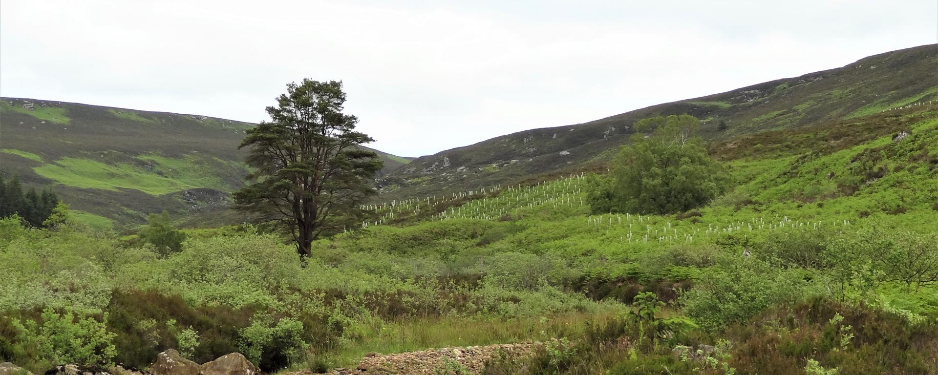 Image of the wildwood area in Northumberland